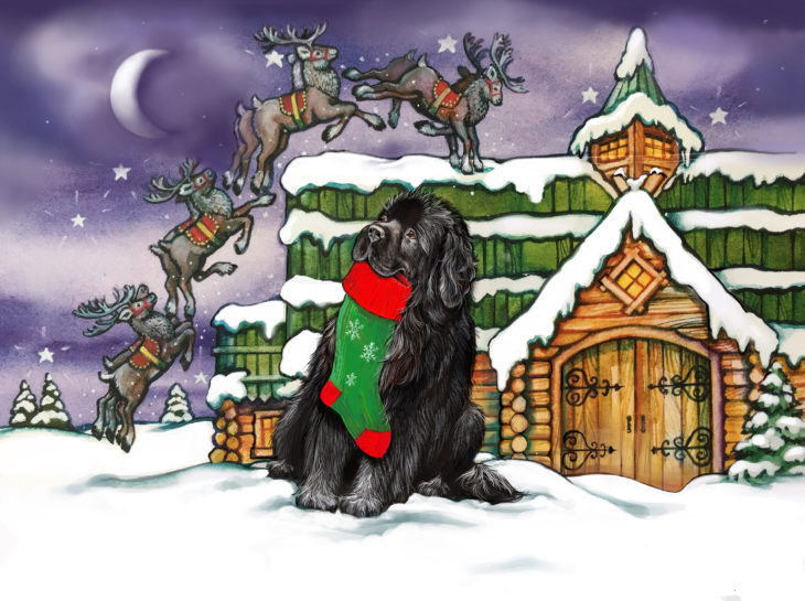 Newfie and Christmas stocking