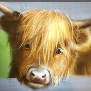 Highland cow cute face