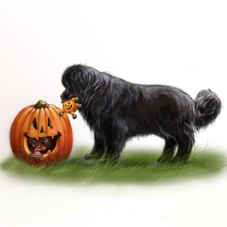 Newfie and pumpkin